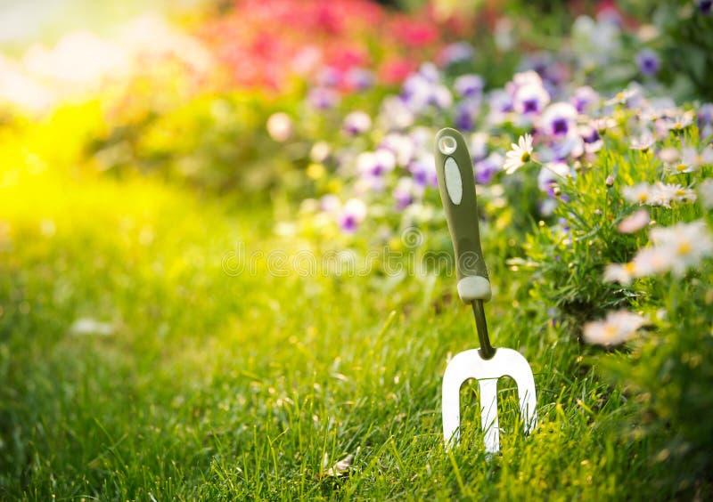 园艺工具和花在庭院里 免版税库存照片