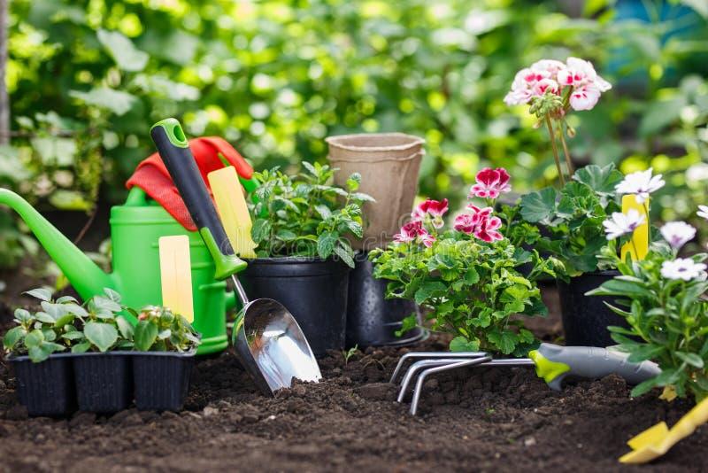 园艺工具和花在罐种植的在后院 免版税库存照片
