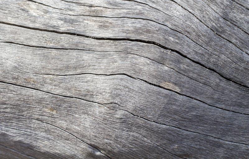 困厄的木纹理特写镜头照片 冷的灰色木背景 免版税库存照片
