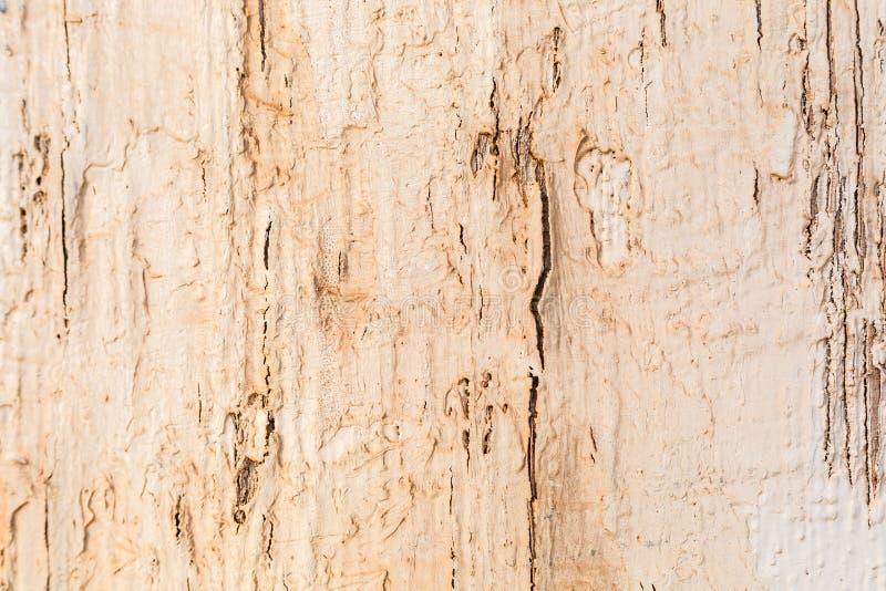困厄的破裂的老木头被风化的背景 免版税库存照片