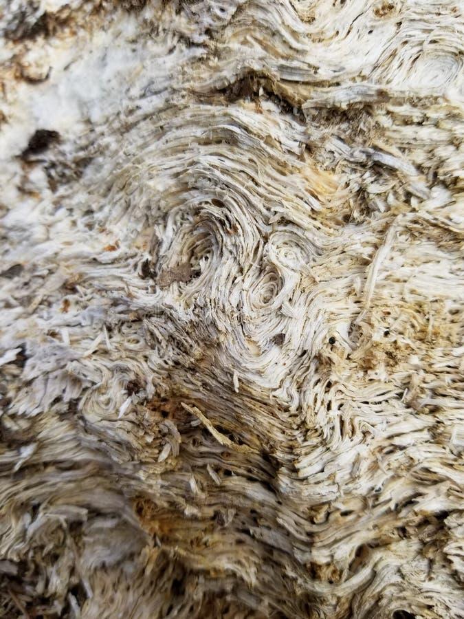 困厄的腐朽的木头 免版税库存图片