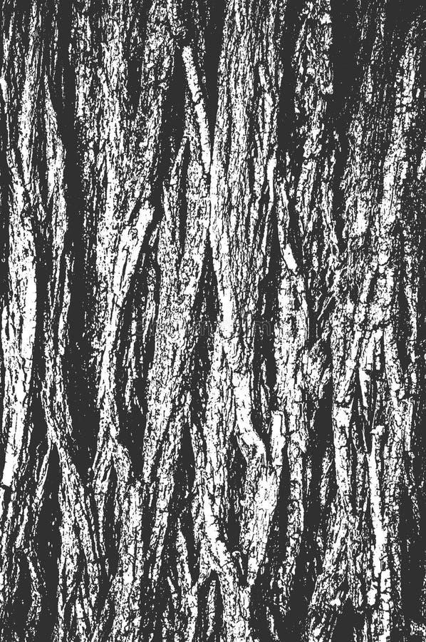 困厄老干燥木纹理 免版税库存照片