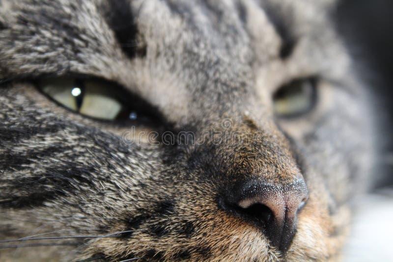困猫 库存照片