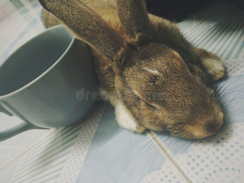 困的兔宝宝 免版税库存照片