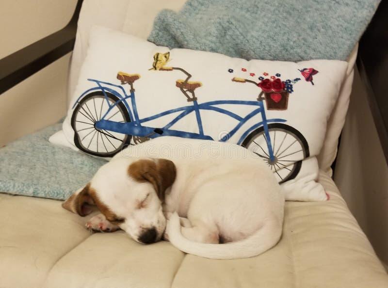 困的小狗 库存图片