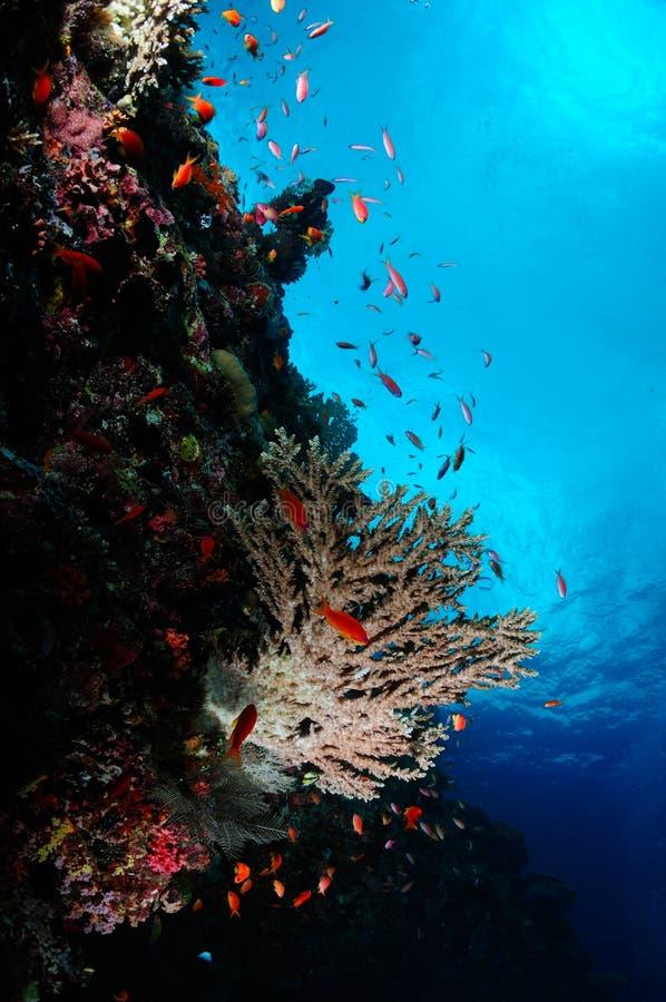 困难珊瑚 免版税图库摄影