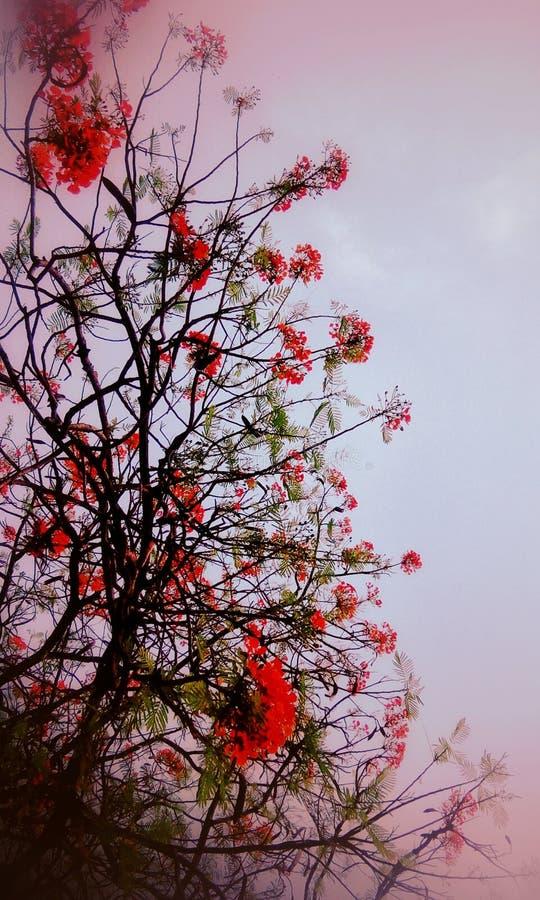 围拢在桃红色花和绿色词根的桃红色 图库摄影
