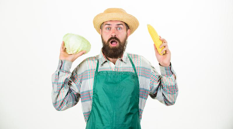 围裙举行菜的新鲜的有机菜收获行家花匠 人有胡子的提出的棒子玉米和 免版税库存图片