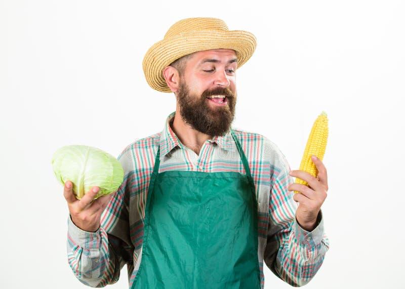 围裙举行菜的行家花匠 农夫草帽举行棒子圆白菜菜 人有胡子提出 库存图片