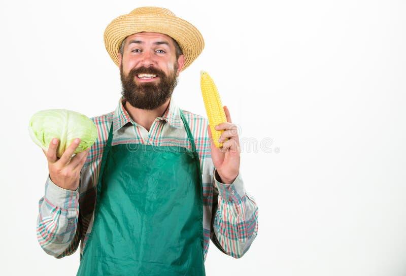 围裙举行菜的行家花匠 农夫草帽举行棒子圆白菜菜 新鲜的有机蔬菜 图库摄影