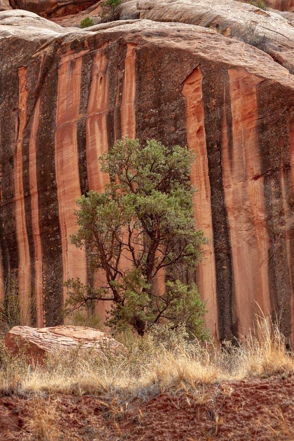 国会大厦礁石沙漠风景,犹他 免版税库存照片