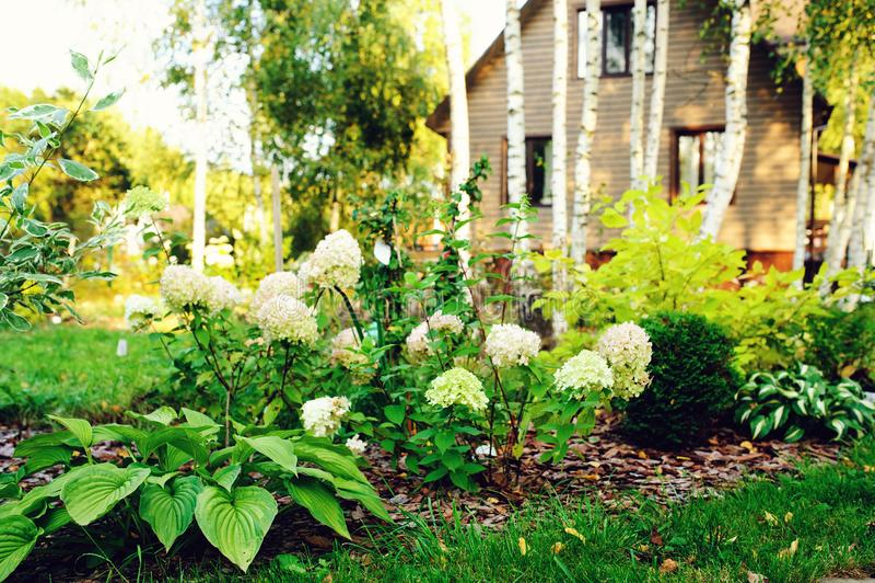 国家与木房子草坪和多年生植物的庭院视图 免版税库存照片
