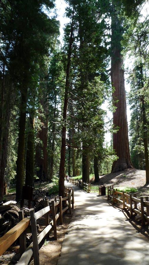 国家公园被遮蔽的路美国加州红杉 库存图片