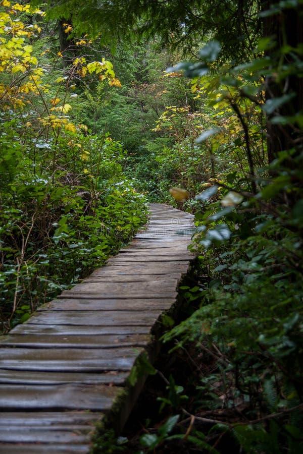 国家公园路径优胜美地 库存照片