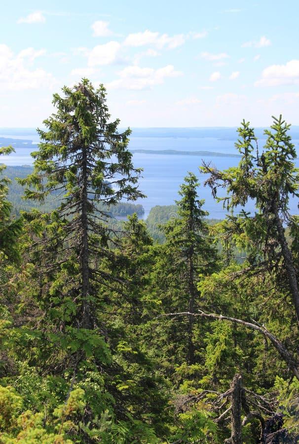 国家公园Koli,芬兰 库存照片