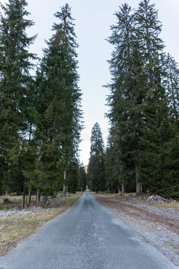 国家带领通过高大的树木的石渣路在山的一个具球果森林里 库存照片
