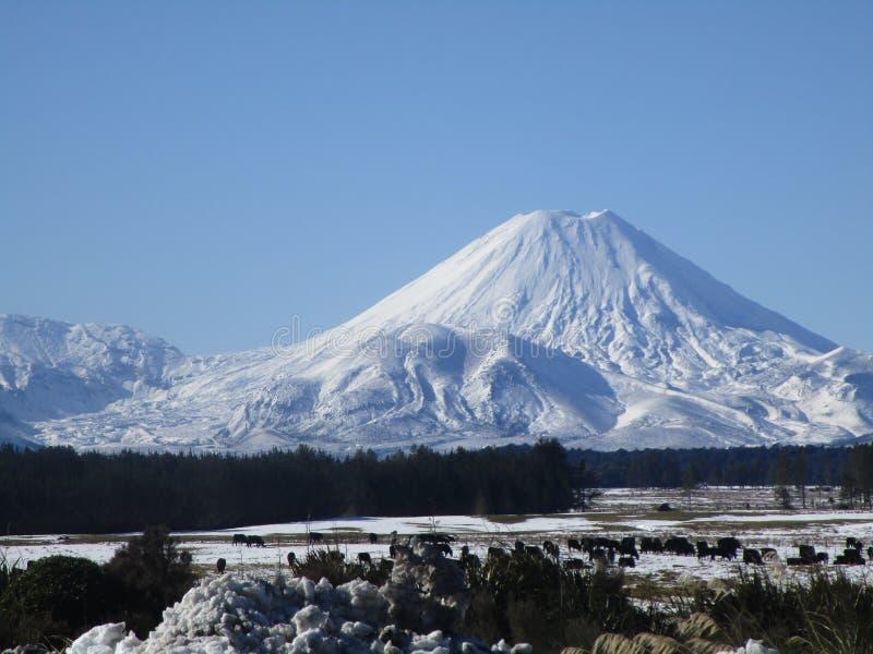 国家新的公园tongariro西兰 免版税库存图片