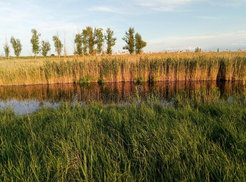 国家河和美丽的芦苇 库存图片