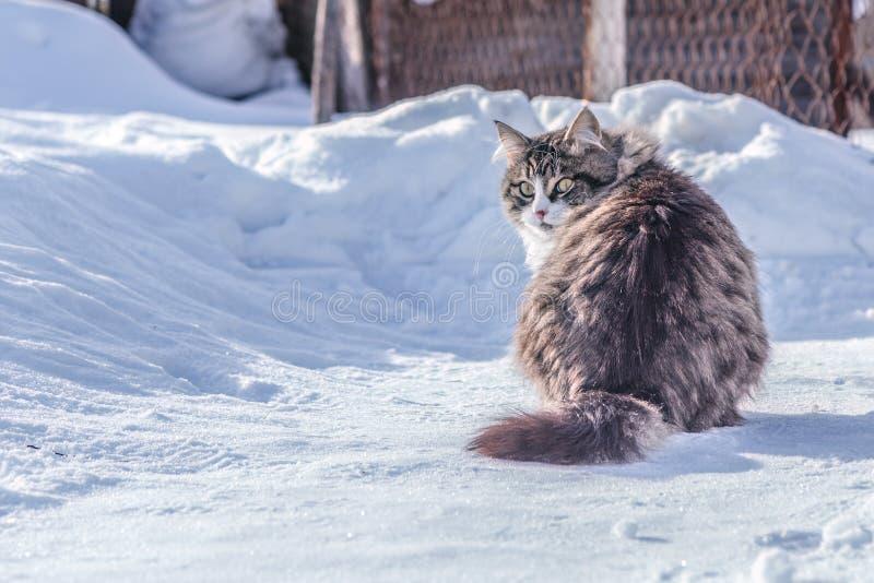 国家狭窄小道本质上在雪的在一个晴天 图库摄影