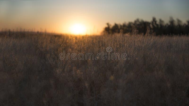 国家草甸日出风景背景安静  免版税库存照片