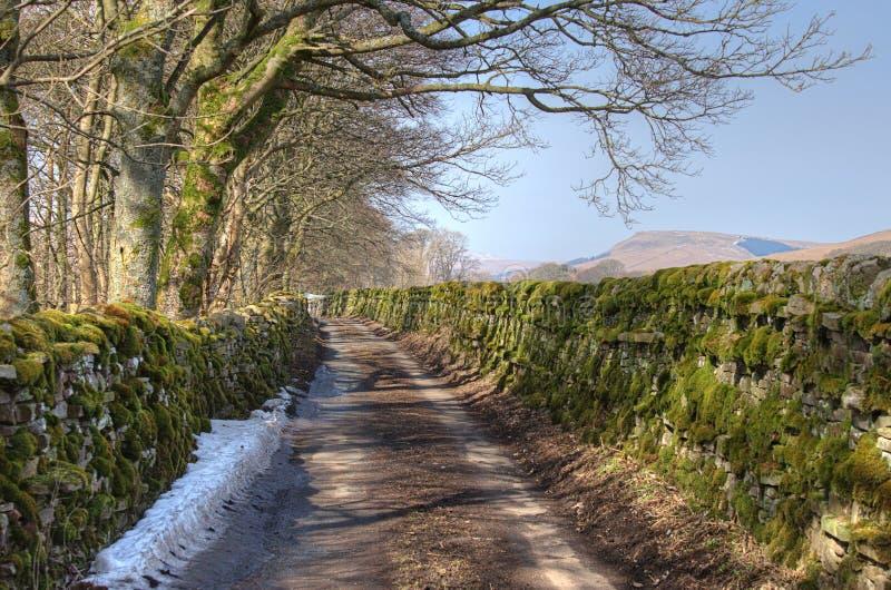 国家车道在冬天 免版税库存照片