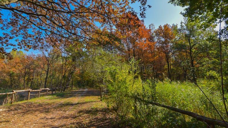 国家道路在与树的秋天 库存图片