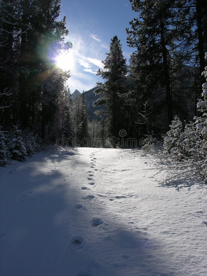 国家(地区)冬天 图库摄影