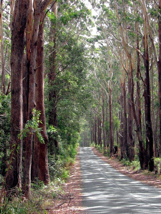国家(地区)排行了路结构树 免版税库存图片