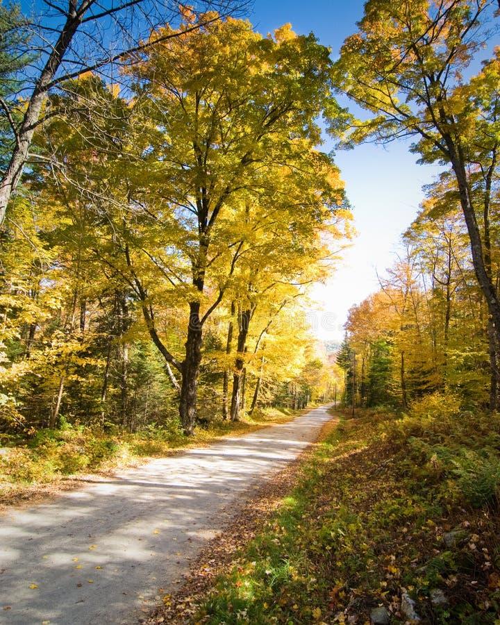 国家(地区)横穿森林公路壮观 库存照片