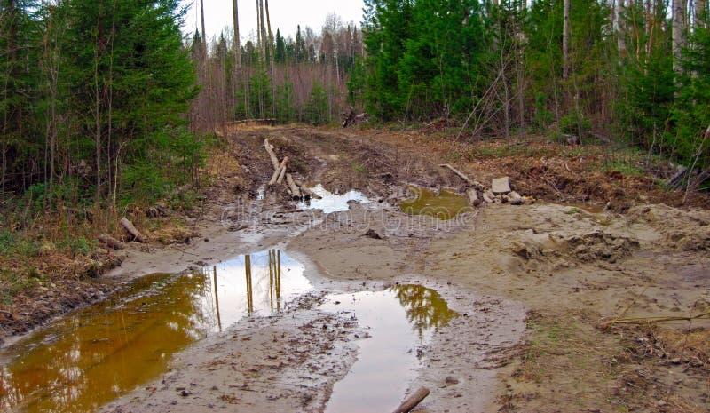 国家(地区)通配的森林公路 免版税库存图片