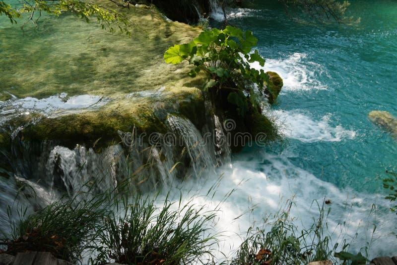 国立公园Plitvice湖克罗地亚-小的瀑布和一棵植物它的 库存照片