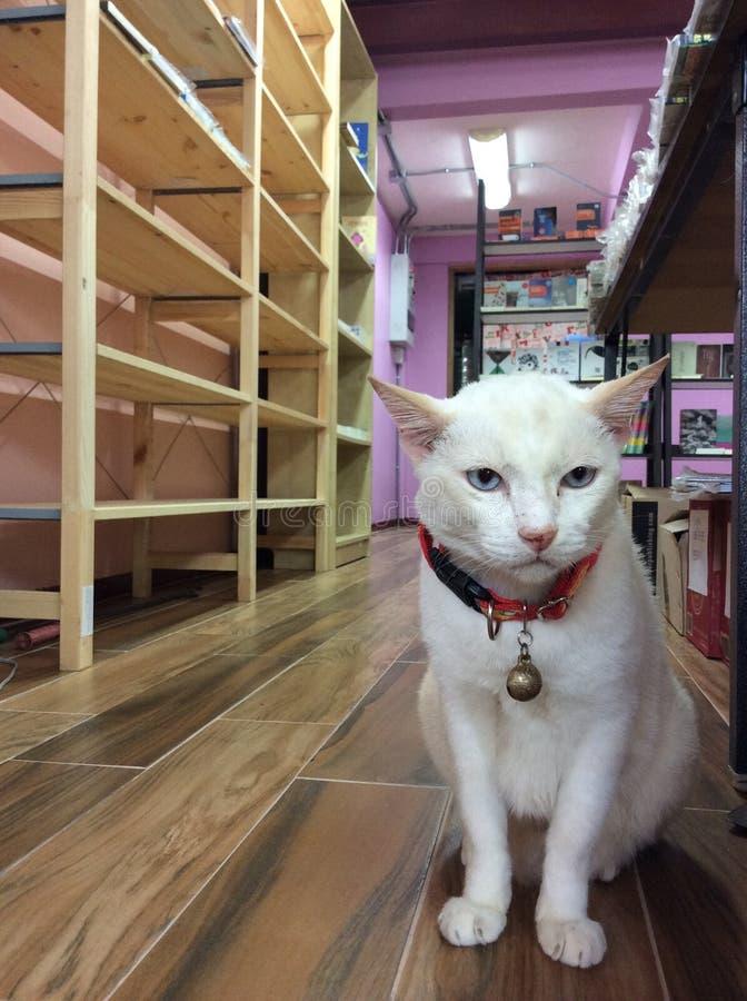 图书管理员猫 库存图片