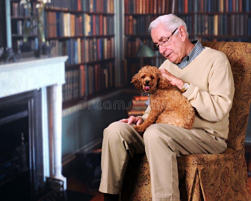 图书馆小狗 库存照片