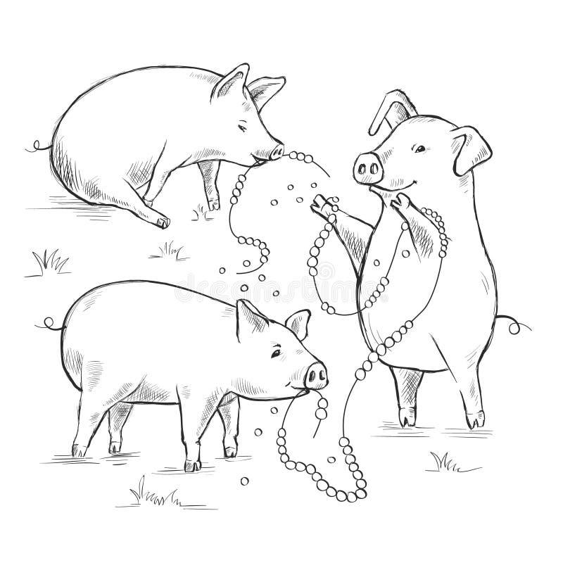 图片用小猪 谚语和说法 不要投掷您的珍珠对猪 等高线图画 库存例证