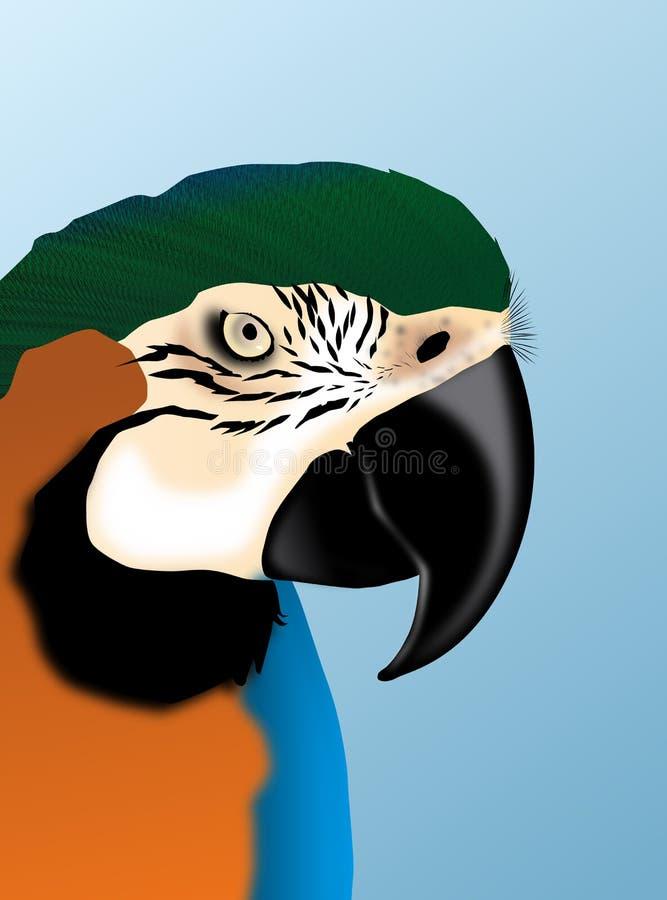 图画鹦鹉 免版税库存照片