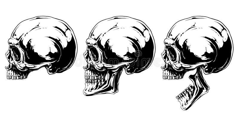 图表黑白人的头骨投射集合 皇族释放例证