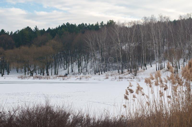 图象冬天湖在公园 免版税库存图片