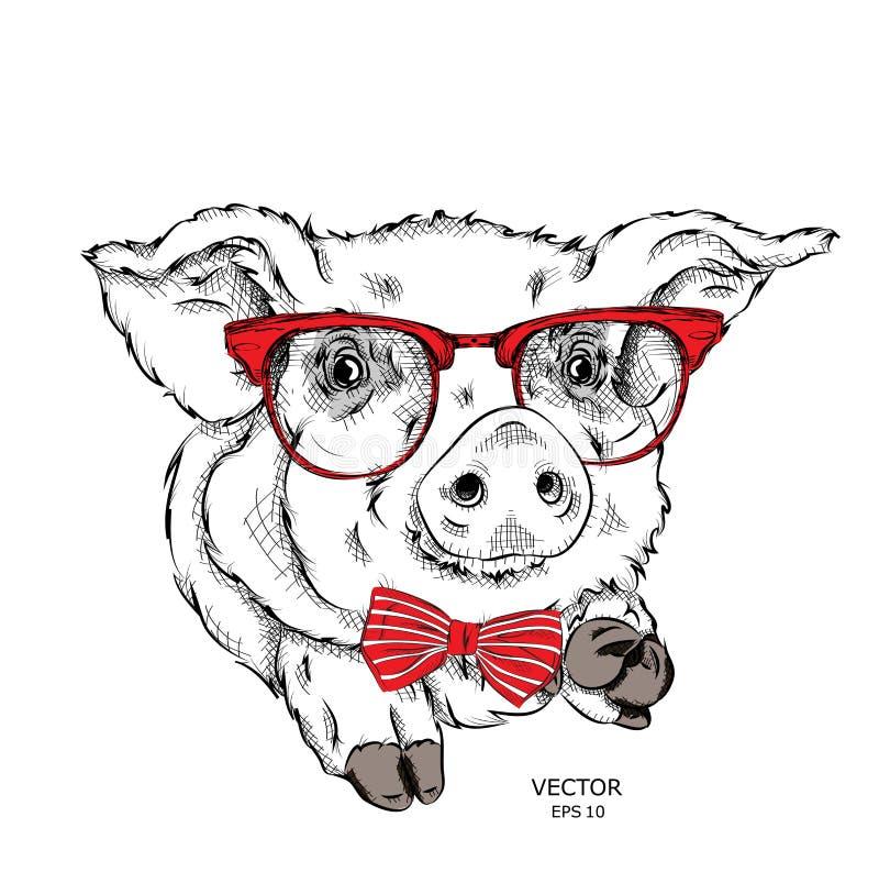 图象画象猪在领巾和与玻璃 也corel凹道例证向量 向量例证