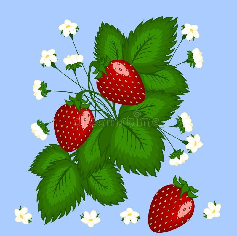 图,例证 布什草莓用三个红色莓果和白花 皇族释放例证