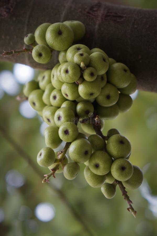 Download 图绿色结构树 库存照片. 图片 包括有 纤维, 重点, 问题的, 增长, 绿色, 澳大利亚, 开花, 水平 - 72358550