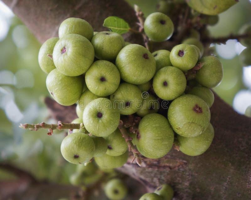 Download 图绿色结构树 库存照片. 图片 包括有 干燥, browne, 蓬松, 问题的, bossies, 竹子 - 72358552