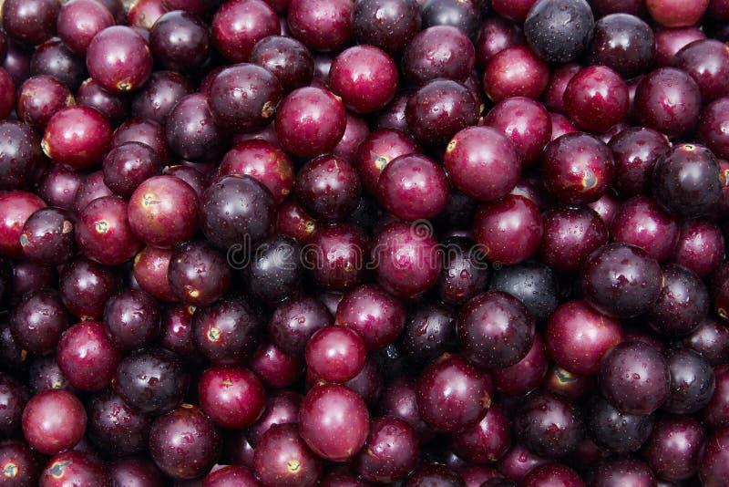 Download 圆叶葡萄 库存照片. 图片 包括有 红色, 果子, 紫色, 五颜六色, 新鲜, 堵塞, 葡萄, 果冻 - 2993388