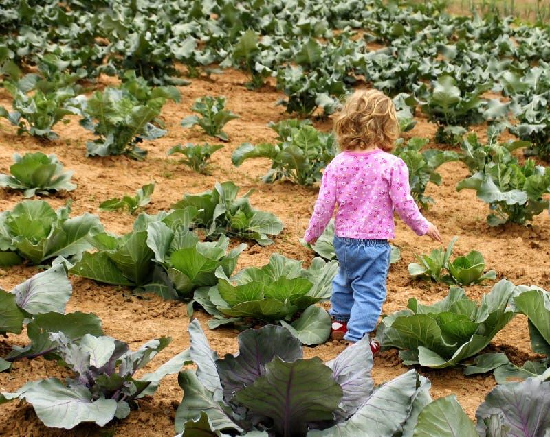 圆白菜儿童补丁程序 库存图片
