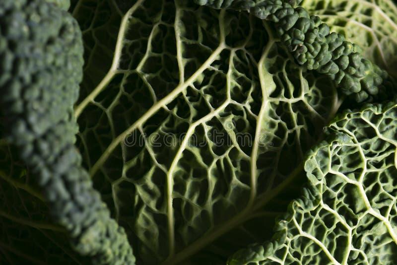 圆白菜叶子细节  库存照片