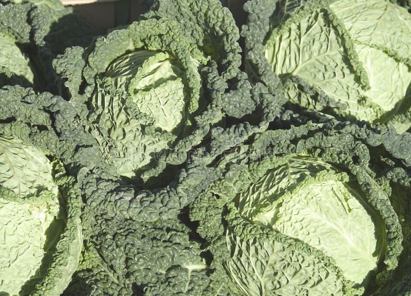 圆白菜开胃菜类型 免版税库存图片