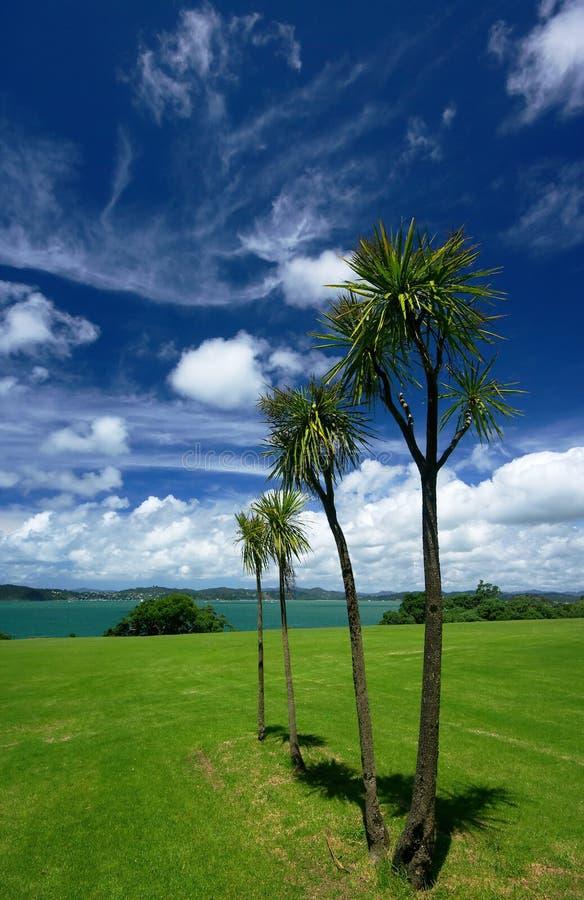 圆白菜新的结构树西兰 库存图片