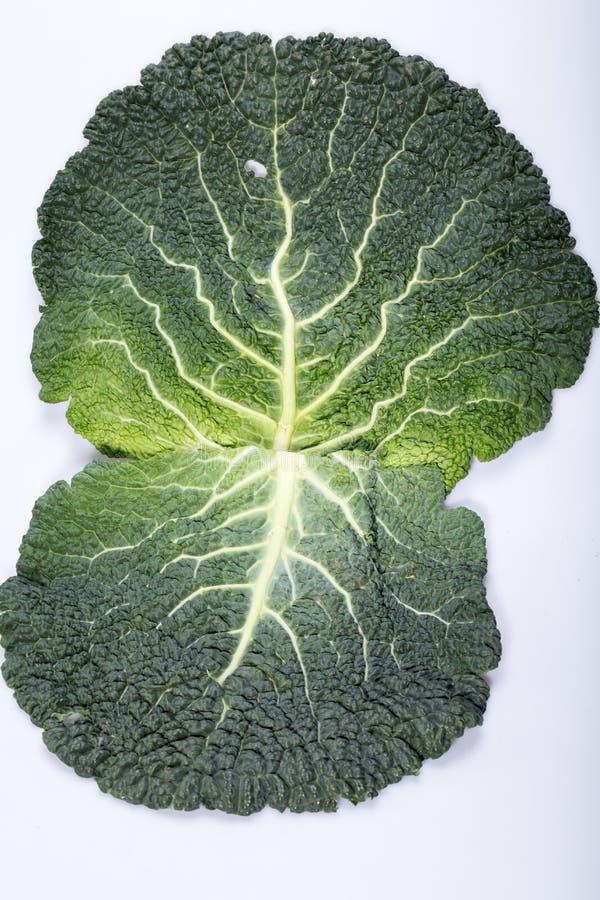 圆白菜新鲜的叶子开胃菜 免版税库存图片