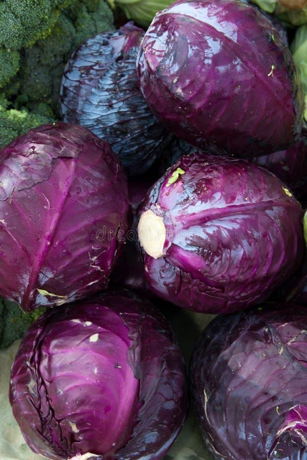 圆白菜有机紫色 图库摄影