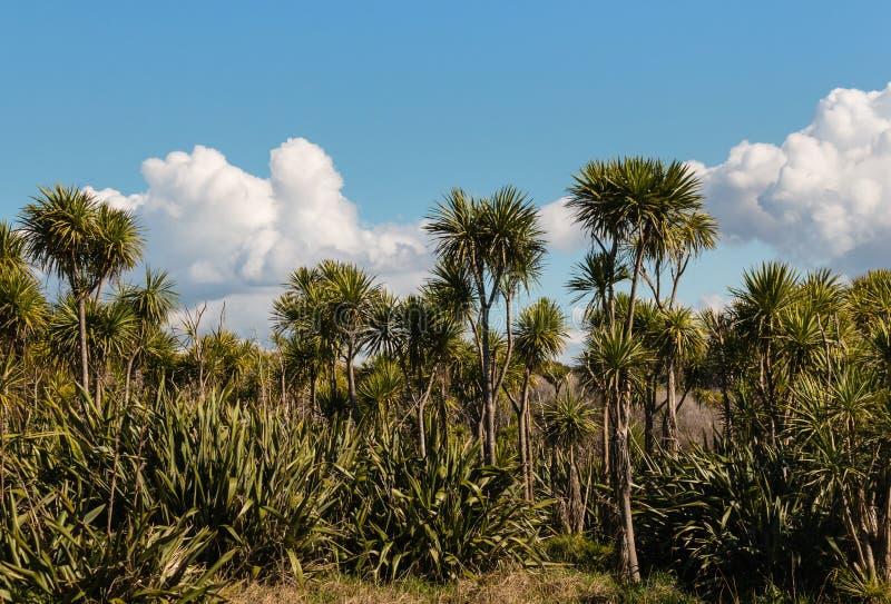 圆白菜树和新西兰胡麻灌木 库存照片