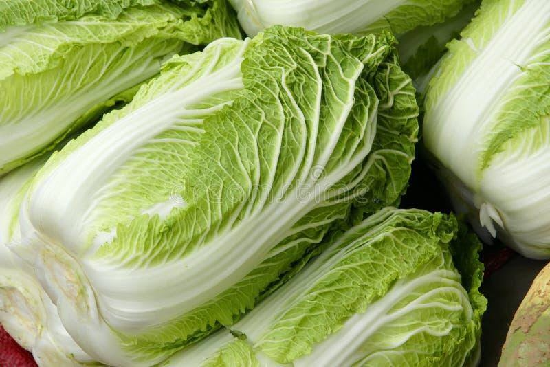 圆白菜汉语 库存照片